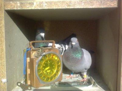 pigeonnier 2010