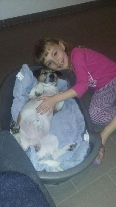 le chien-loup qui est bien heureux y a trouvé le bonheur sa petite fille Célia  2018