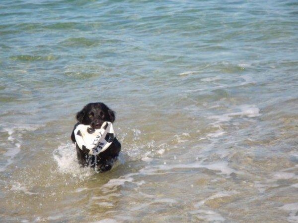 Loulou, le chien d'une vie