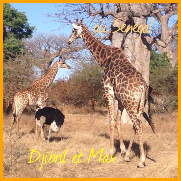 Le Sénégal et sa faune