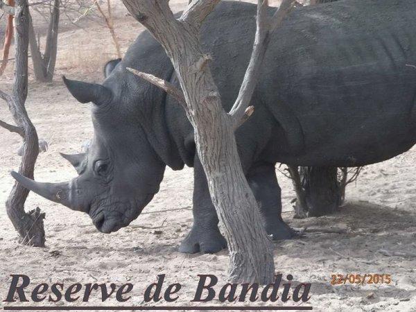 Réserve de Bandia Sénégal au depart du Royal baobab Somone Decameron