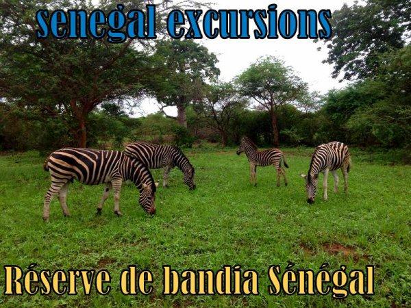 Nos Excursions au départ de Saly Somone, Nianing Sénégal ( Sénégal Excursions Djibril & Max)