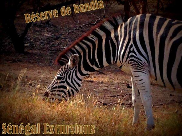 LES MEILLEURS EXCURSIONS AU SENEGAL AVEC DJIBRIL ET MAX SENEGAL EXCURSIONS DEPUIS 10 ANS NOUS VOUS FAISONS TOUJOURS ADORER LE SENEGAL