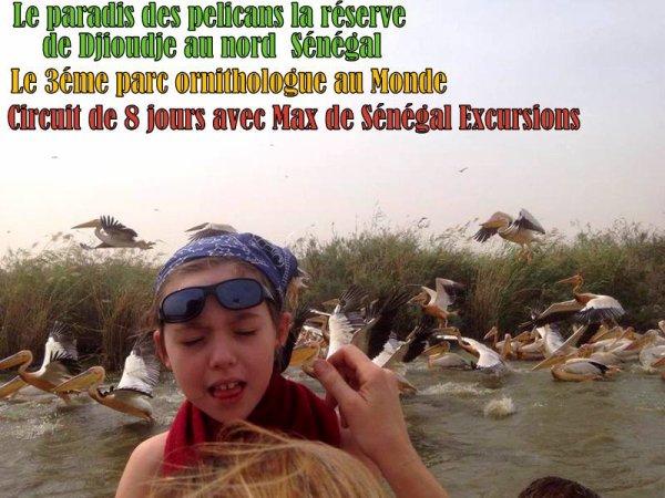 2 éme jour de circuit la visite de Saint louis du Sénégal en Calèche et la réserve ornithologue de Djioudje au Nord du Sénégal