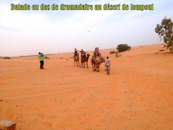 Envie de vous évader de rencontrer d'autres cultures et d'autres traditions Sénégal excursions vous propose des circuits familiaux en toute harmonie