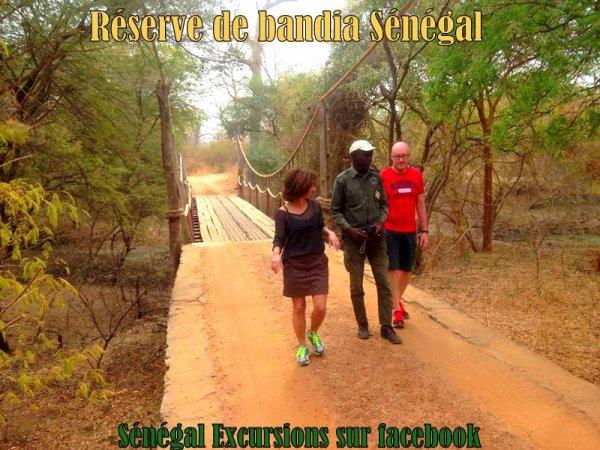 EXCURSION EN DEMI JOURNÉE RESERVE DE BANDIA SENEGAL