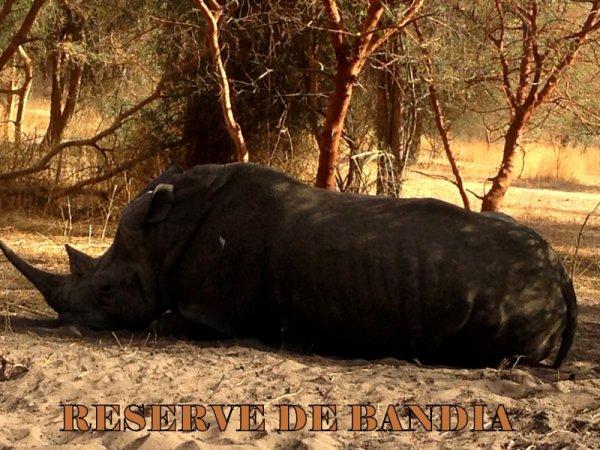 Demi journée réserve de bandia au depart de la somone hote royal baobab decameron