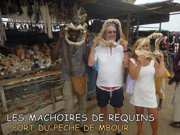MERCI A NOS AMIS DU PORTUGAL QUI ONT SEJOURNE AU ROYAL BAOBAB SOMONE