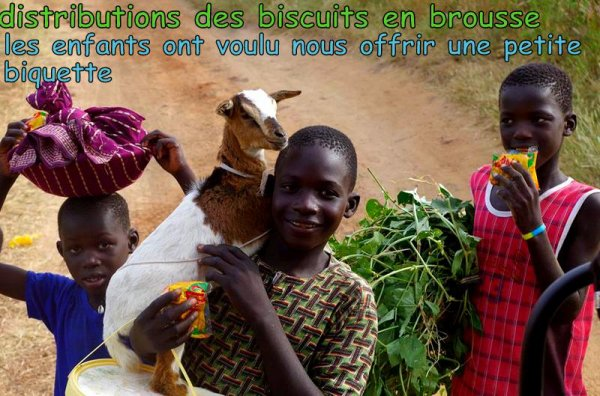 DELTA DU SINE SALOUM AU DEPART DU ROYAL BAOBAB SOMONE/SENEGAL
