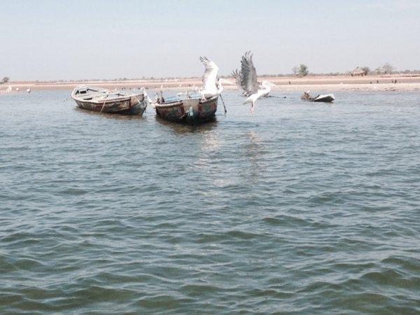 Decouverte de la brousse et des villages au départ de la résidence mangrove saly
