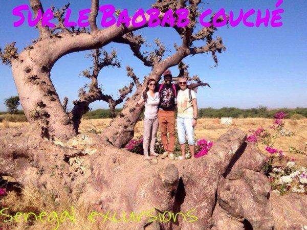 Nos balades en TGV au départ du royal baobab à la somone