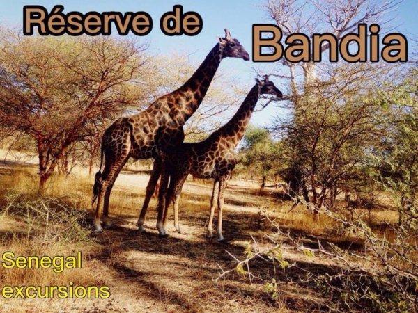 Decouverte de la Réserve de bandia Avec senegal Senegal excursions au départ de saly