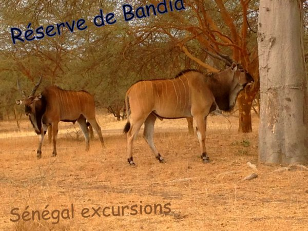 RESERVE DE BANDIA AVEC NOS AMIS DE AMIS DE L'HOTEL FILAOS SALY ET HOTEL NEPTUNE SENEGAL