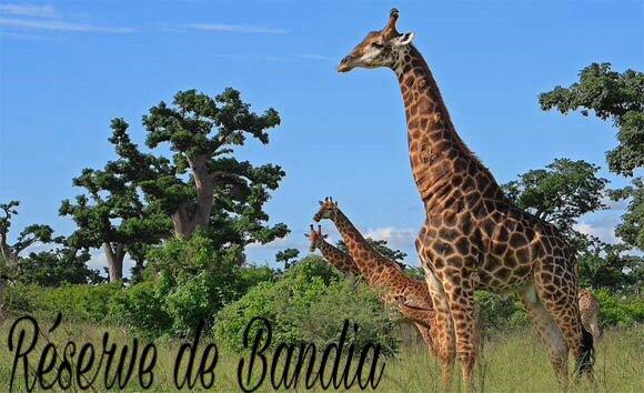 Réserve de Bandia au départ de Saly et de la Somone