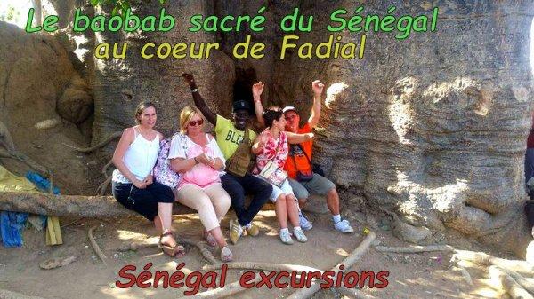 Senegal excursions visiter le Sénégal au départ de l'hotel royal baobab, palm beach saly Sénégal