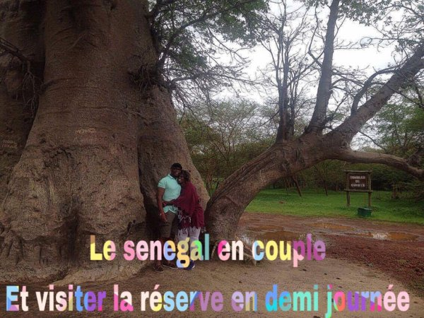 Une magnifique demi journée réserve au départ du royal baobab