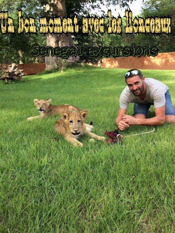 Les meilleurs Excursions au départ de saly, balade avec les lionceaux du Senegal.
