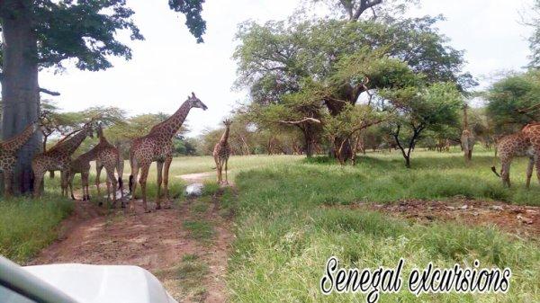 Réserve de Bandia au Senegal avec nos amis du Saly