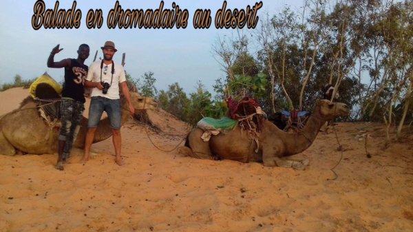Une nuit magique au desert de lompoul avec nos amis de saly. Les excursions à découvrir au Senegal