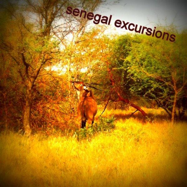 Excursions réserve de bandia avec nos amis de l'hotel Filaos Saly  look voyage, Sénégal vivez les meilleurs excursions au Départ de Saly