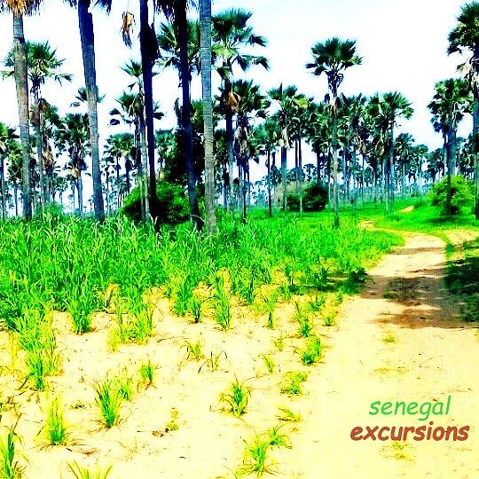 SENEGAL EXCURSIONS vous assure les meilleurs excursions du senegal en toute confort et securité. Au depart de la somone saly mbour et nianing avec les meilleurs hôtels de la localités