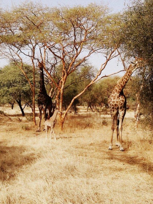 Vos excursions au Sénégal en famille. Merci à nos amis du royal baobab.