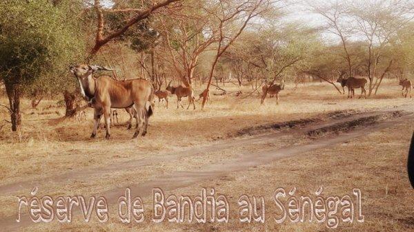 Au départ du royal baobab jet tour Senegal vivez les meilleurs excursions en famille.