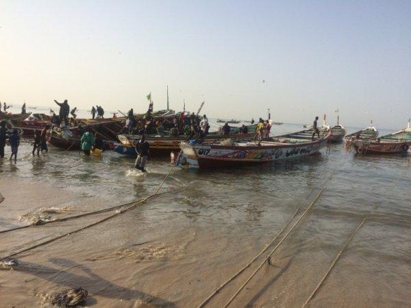 La Somone au Sénégal. Belle matinée retour des pêcheurs à mbour et son marché typique à découvrir avec des guides compétents