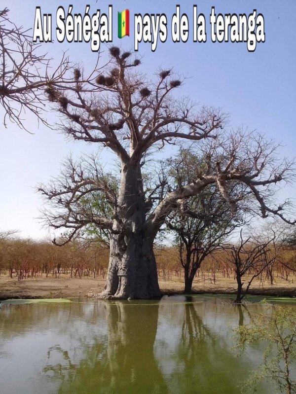 Une belle matinée d'excursion à la réserve de bandia avec nos amis de l'hôtel Royal baobab horizon la Somone