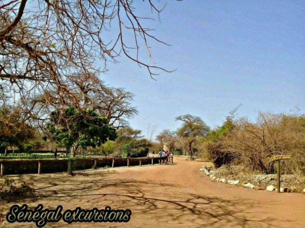 Au depart du royal baobab une tres belle journee d'excursion dans la sourire et en petit comité.