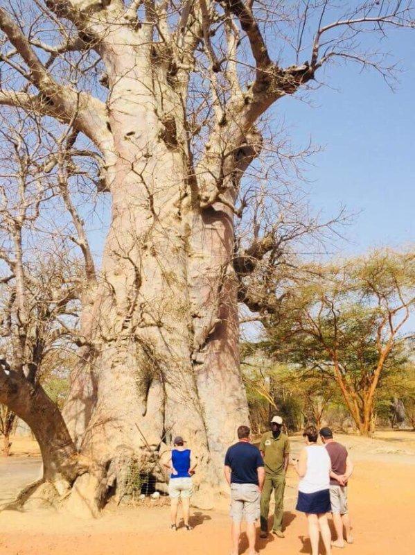 Une belle découverte de la réserve de bandia avec nos amis de l'hôtel royal baobab jet tour à la Somone