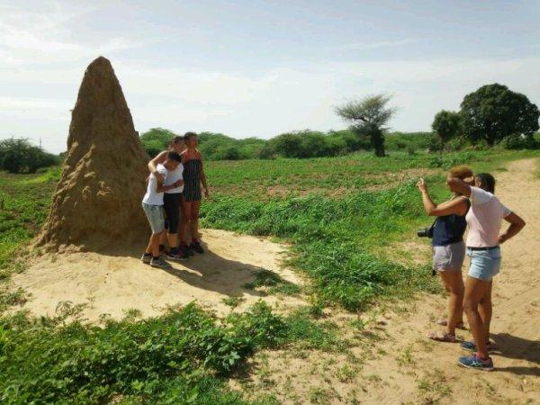 Sénégal excursions , une belle expédition dans le delta du sine et saloum