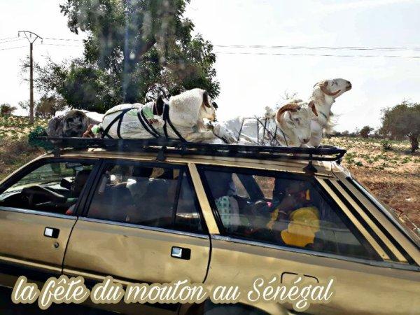 St Louis et le désert de lompoul au départ de Salu. Senegal Excursions demandez le meilleur et nous vous donnerons l'excellence.
