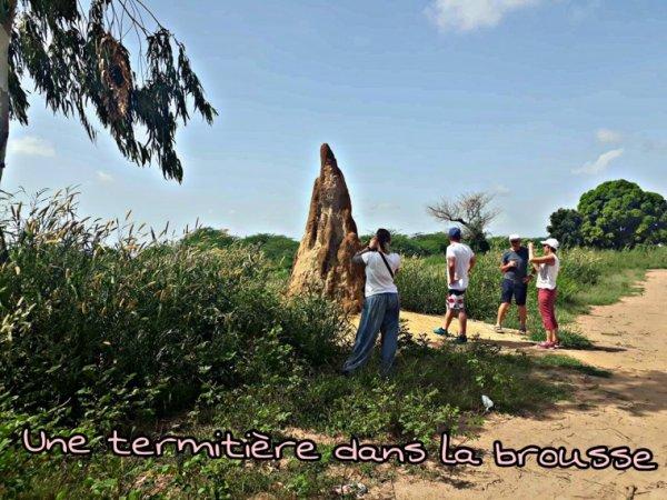 Une belle découverte du pays de la teranga au départ de Saly en toute convivialité, pour mieux apprécier vos excursions