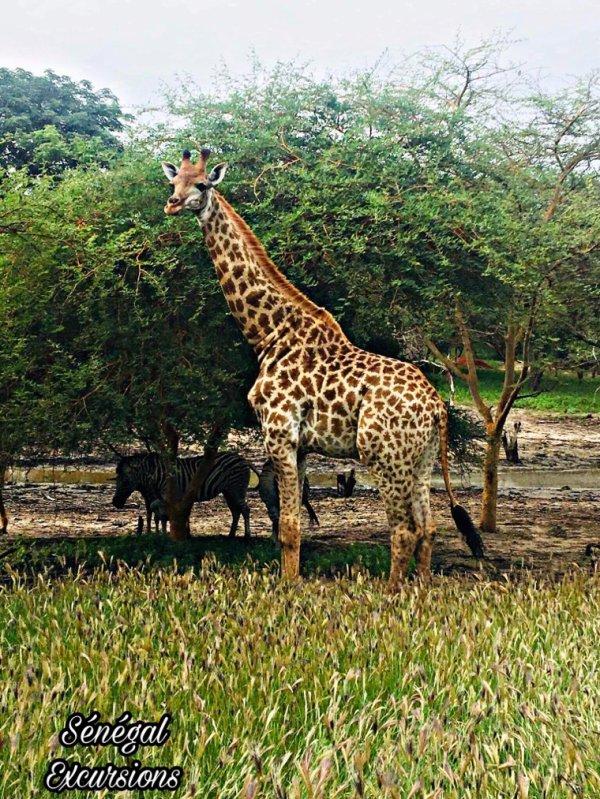 Au départ du Royal baobab en famille