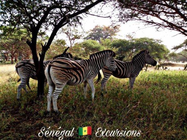 Sénégal Excursions vivez les meilleurs des excursions au Sénégal