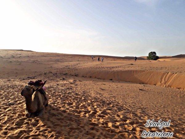 Découverte du nord du Sénégal. De bon moment avec nos amis du Royal Baobab en toute convivialité .