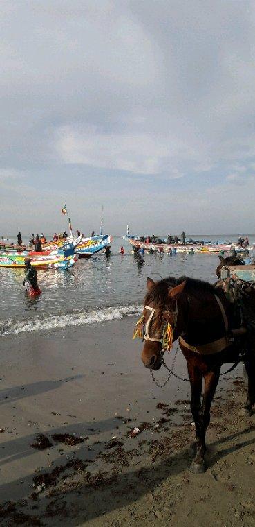Sénégal Excursions vivez les meilleurs excursions au Sénégal