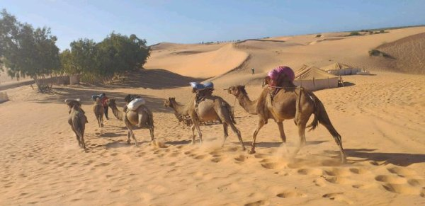 Vivez les meilleurs excursions au Sénégal.Senegal Excursions au désert de Lompoul