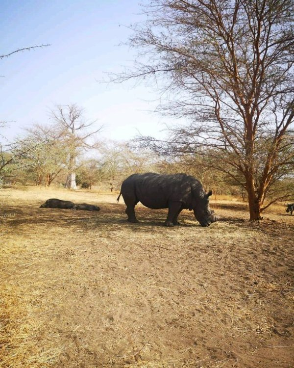 Belle matinée à  la réserve de bandia avec nos amis du Royal baobab qui nois ont fait confiance pour des excursions  en famille en toute convivialité
