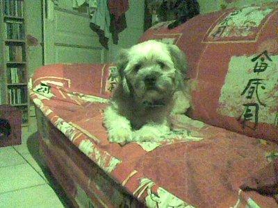 mon chien tobby
