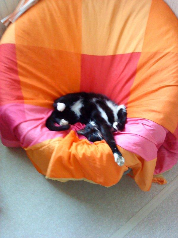mon chat loulou:(