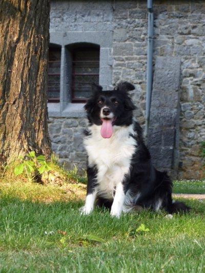 Présentations de mes chiens : Faisha Specially For You