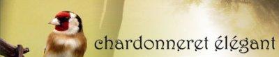 DESCRIPTION DU CHARDONNERET ADULTE