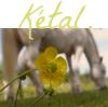 Ketal-x-Musique