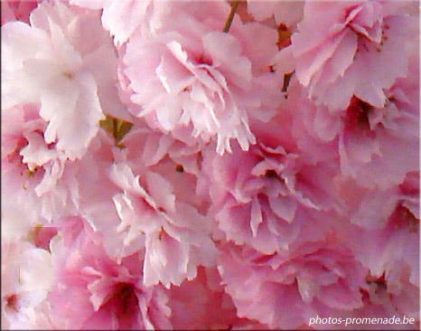 les fleurs de la passion