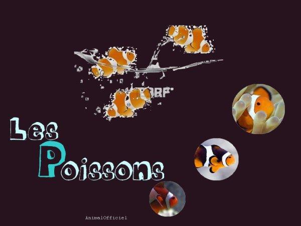 Fiche n°o1 : Les Poissons Clown.