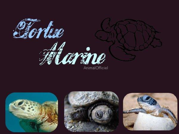 Fiche n°o2 : Les Tortues Marines.