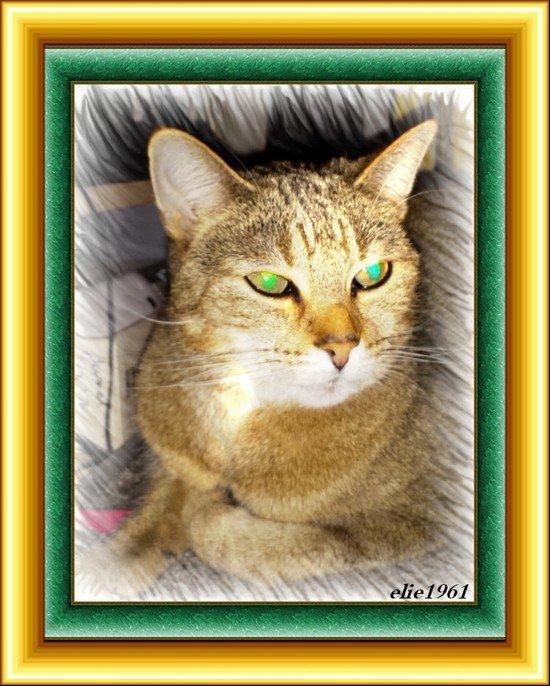 elie1961 mon chat lady (l)(l)(l)