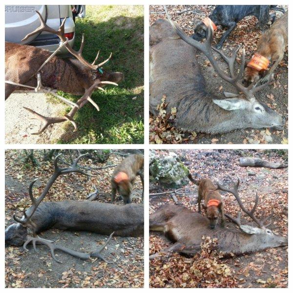 Bonito ciervo matado el sabado en Domaikia